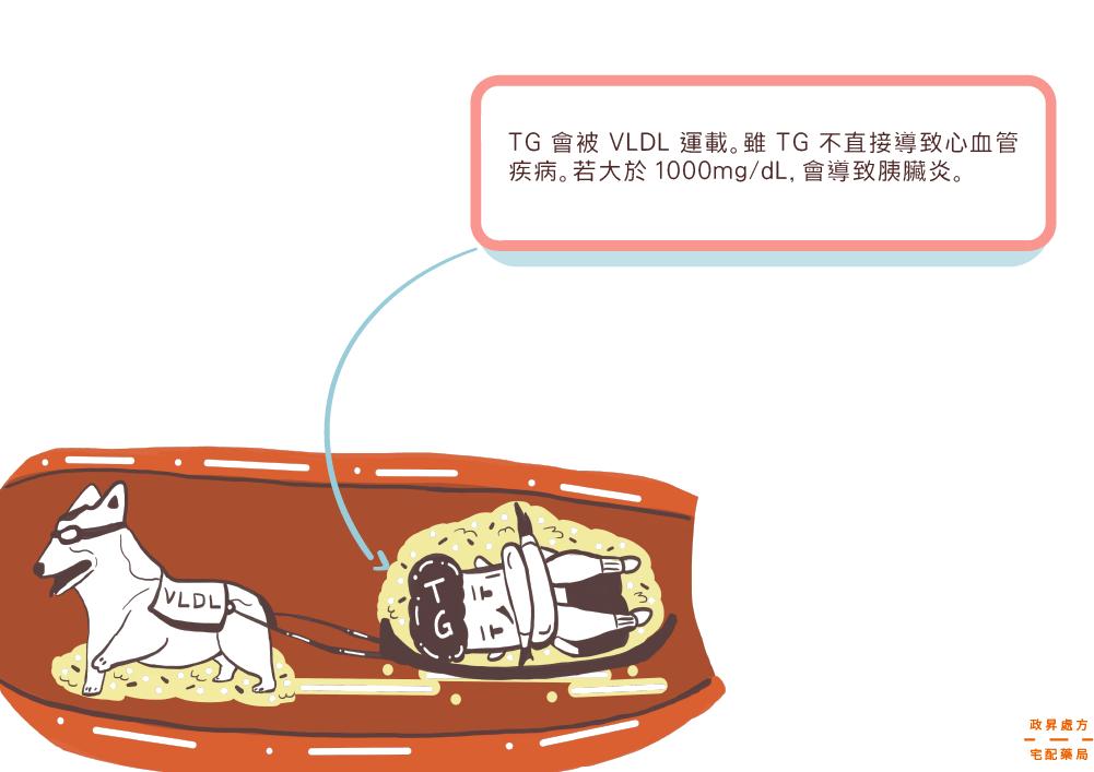 TG三酸甘油脂